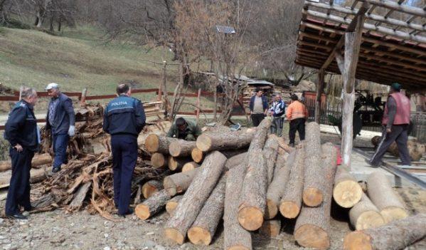 665 mc de lemn confiscat!